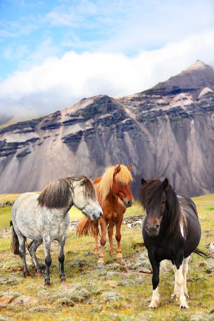 Private Golden Circle & horseback riding