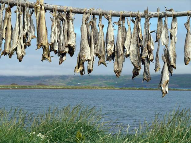 icelandic dried fish - iceland fish